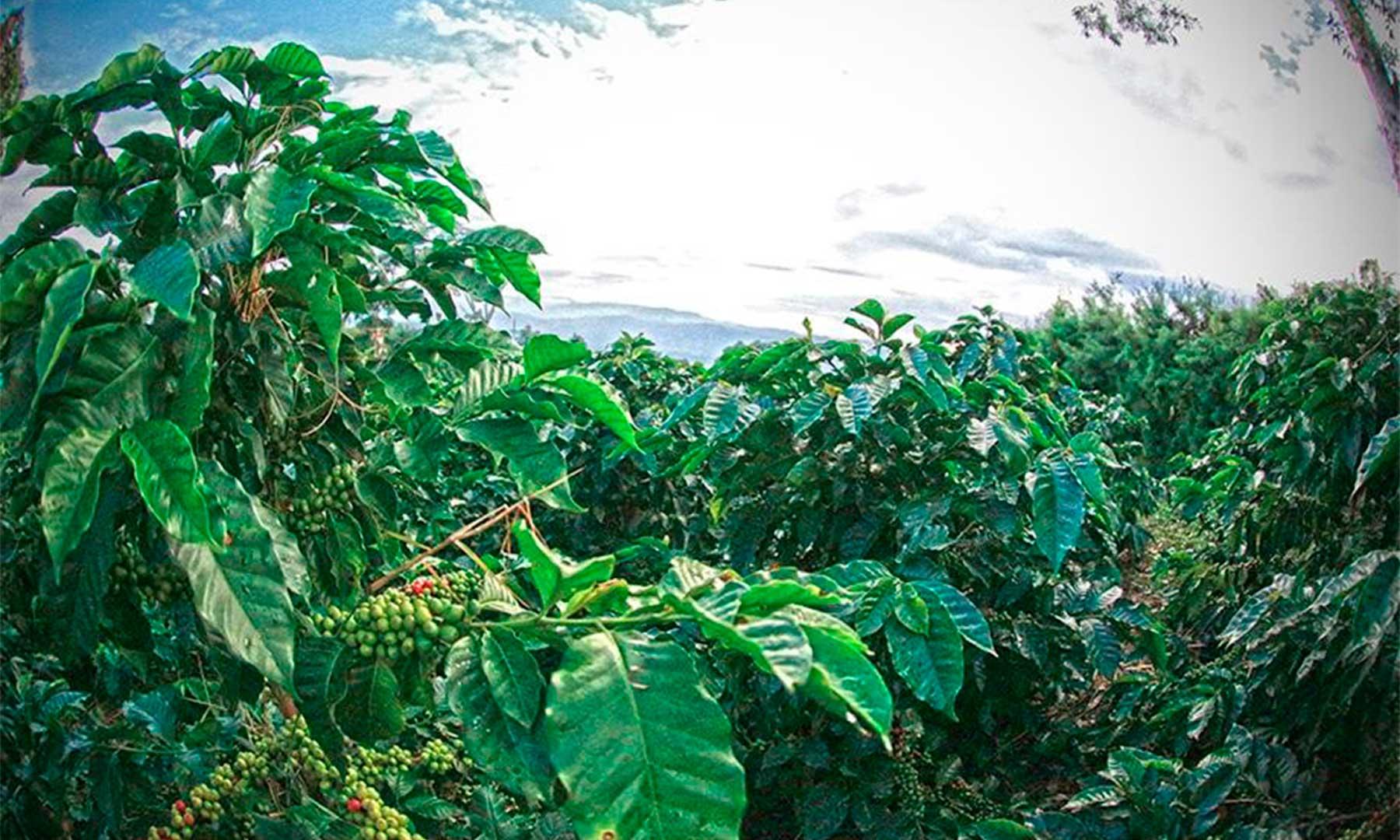 aGRO COLOMBIA Naturaleza