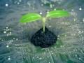 verde ecológico sustentable